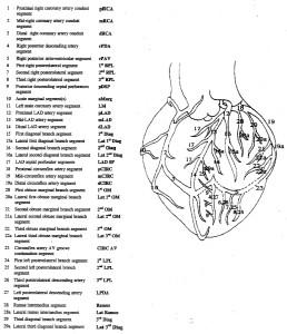 Coronary artery naming convention