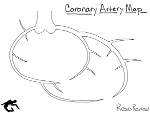 Coronary Artery Diagram