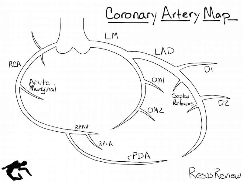 Coronary artery diagramming resus review coronary artery diagram ccuart Images